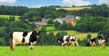 Matériel élevage Schillinger Alsace
